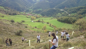 Enlace a Programa de Voluntariado Ambiental